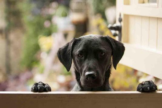Dogs Pictures Wallpaper apk screenshot