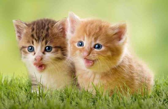 Free cute kitten wallpapers apk download free personalization app free cute kitten wallpapers apk screenshot thecheapjerseys Gallery