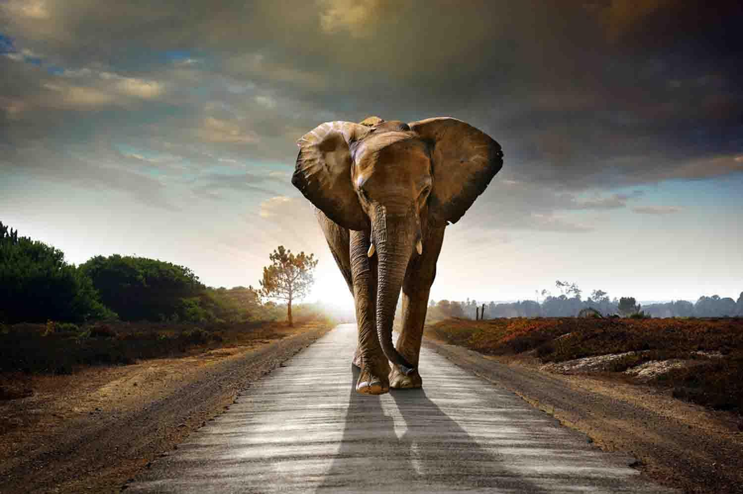 Free Elephant Wallpaper For Android Apk Download