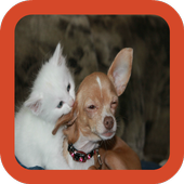 Kitten and Puppy Wallpaper icon