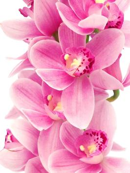 Orchids Wallpaper poster
