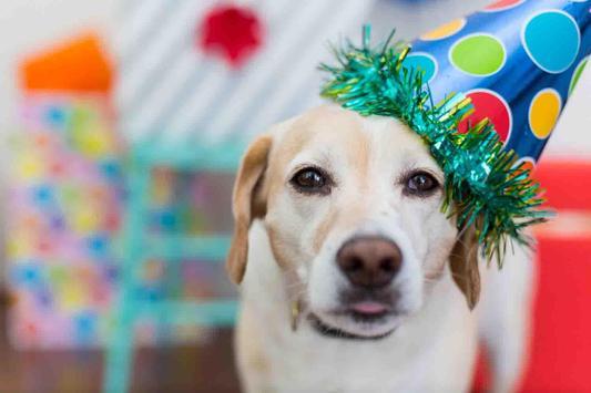 Pet Dog Wallpaper screenshot 19