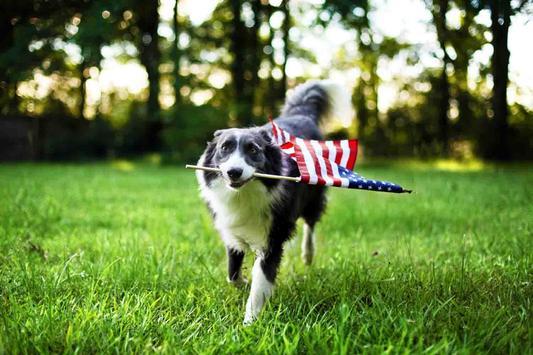 Pet Dog Wallpaper screenshot 8