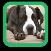 Pitbull Puppy Wallpaper icon