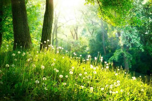 Spring Wallpaper screenshot 13