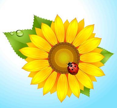 Sun Flower HD Wallpapers poster