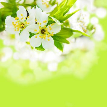 Spring Flowers Free Wallpaper screenshot 12
