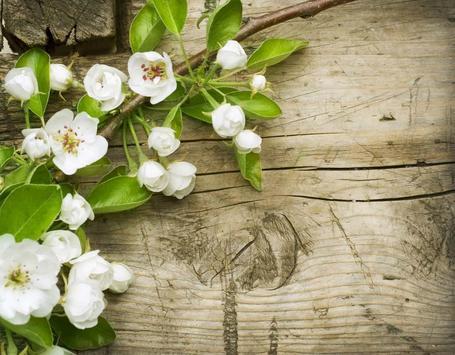 Spring Flowers Free Wallpaper screenshot 1