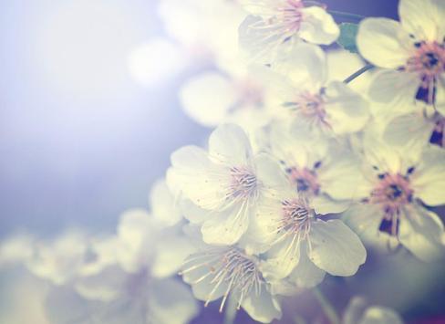 Spring Flowers Free Wallpaper screenshot 6
