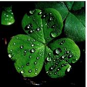 Shamrock Themes Luck Wallpaper icon