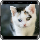 Cat Lock Screen icon