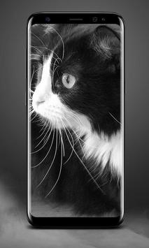 Cat Lock Screen poster