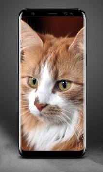Cat Lock Screen screenshot 1