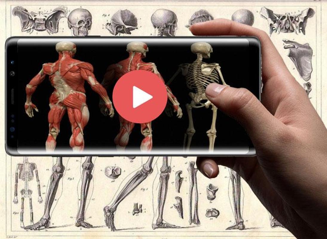 Gray Atlas Of Human Anatomy Book Latest Edition Apk Download Free