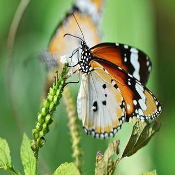 butterfly lwp screenshot 1