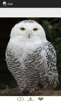 OWL पोस्टर