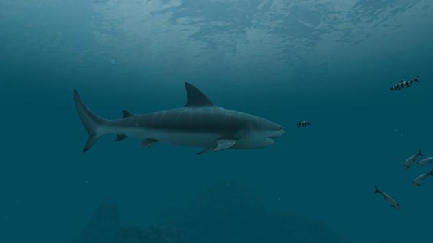 Sharks Wallpaper 2018 Pictures HD Images Free screenshot 9
