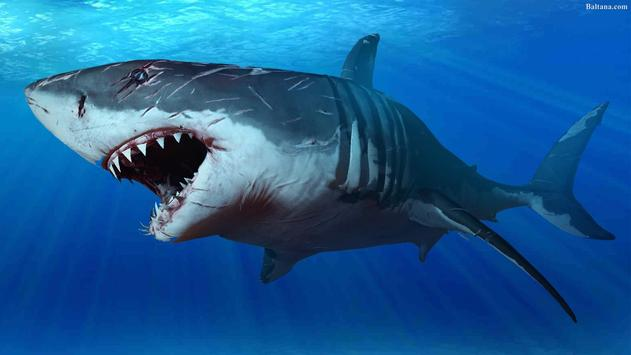 Sharks Wallpaper 2018 Pictures HD Images Free screenshot 12