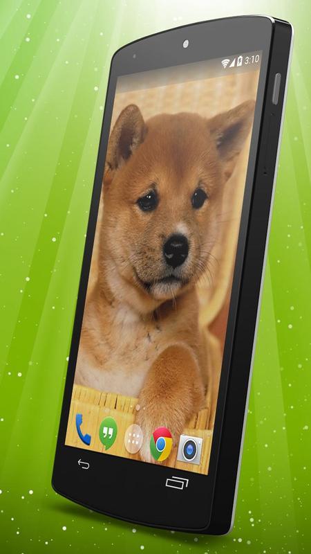 Shiba Doge Live Wallpaper Poster Apk Screenshot