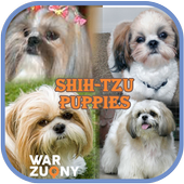 Shih Tzu Puppies Photo Collection icon