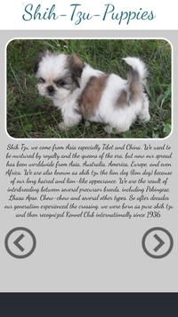 Shih Tzu Puppies Photo Collection poster