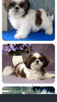 Shih Tzu Puppies Photo Collection screenshot 1