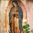 La Rosa de Guadalupe APK