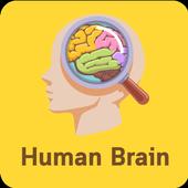 Human Of Brain icon