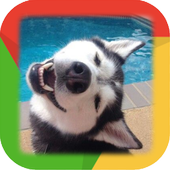 Siberian Husky Wallpaper icon