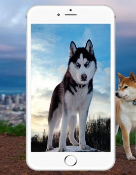 Siberian Husky Wallpaper screenshot 1