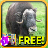 Musk Ox Slots - Free icon