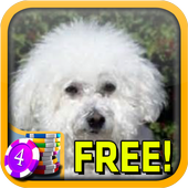 3D Affectionate Bichon Frise icon