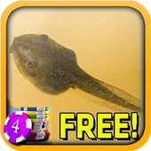 Tadpole Slots - Free icon