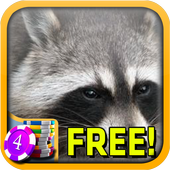 Raccoon Slots - Free icon