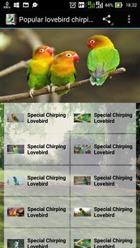 Popular Lovebird Chirping poster