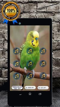 Budgie Bird Sound: Budgie Singing & Budgie Talking screenshot 2
