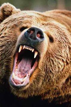 How To Draw Bear Animal apk screenshot