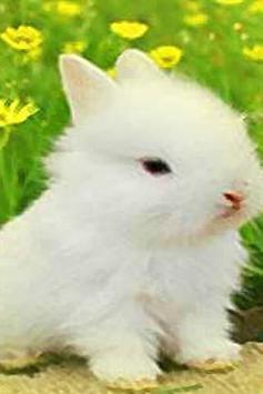 How To Draw Rabbit Bunny apk screenshot