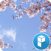 Cherry Blossom and You Theme icon
