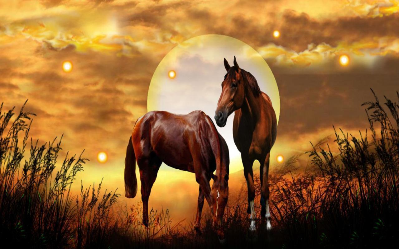 Best Of Pubg Wallpaper Hd安卓下载 安卓版apk: Wild Horses HD Live Wallpaper安卓下载,安卓版APK