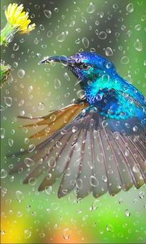 Colibri Love HD apk screenshot