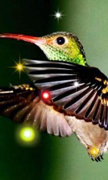 Exotic Hummingbird poster