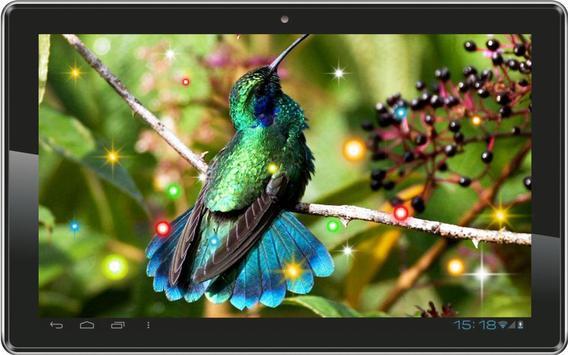 Exotic Hummingbird apk screenshot