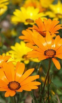 Flowers Wild HD live wallpaper apk screenshot