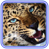 Jaguar Love Heart icon