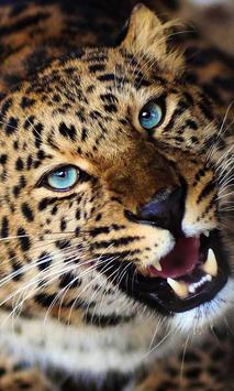 Jaguar Sounds live wallpaper apk screenshot