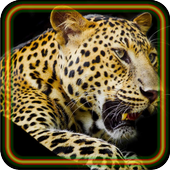 Leopard Jungle icon