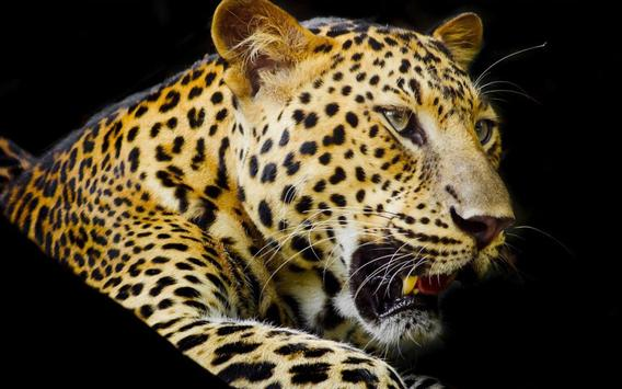 Leopard Jungle apk screenshot