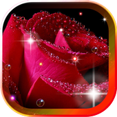 Roses Morning Dew 2016 LWP icon