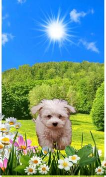 Spring Puppy poster